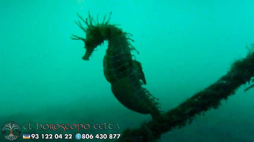Caballito de Mar - tu animal del Horóscopo Celta