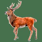 Ciervo - Animales del Horoscopo Celta 150x150