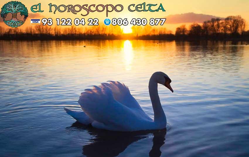 Cisne - tu animal del Horóscopo Celta