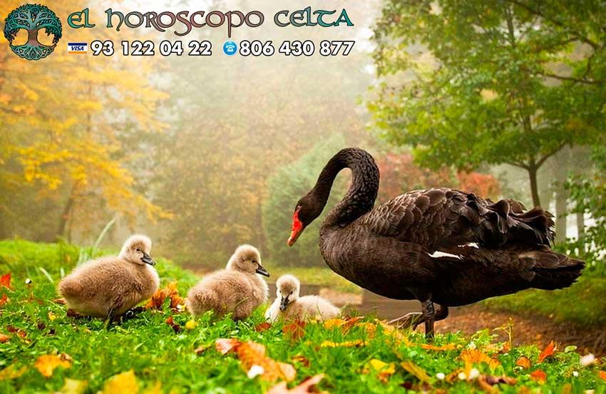 Cisne - tu signo del Horóscopo Celta animal