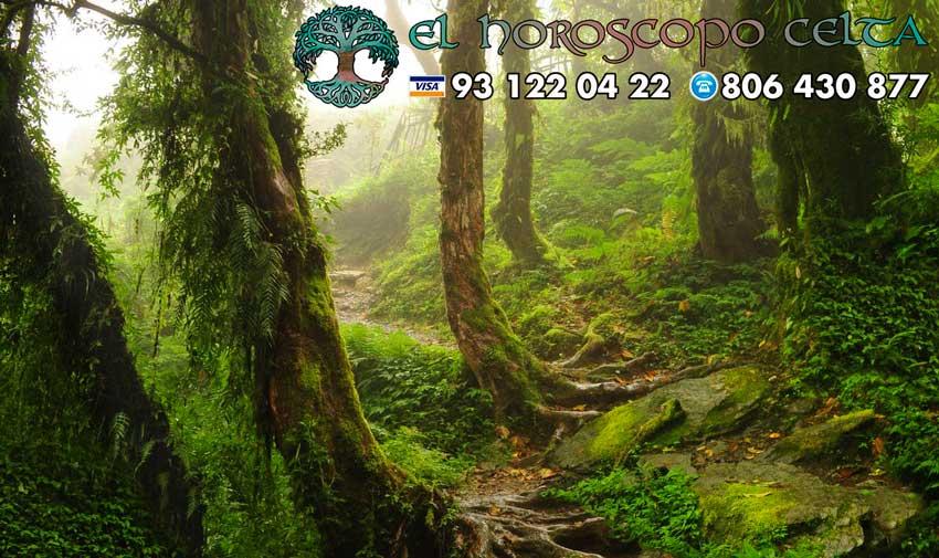 El Álamo - tu árbol celta
