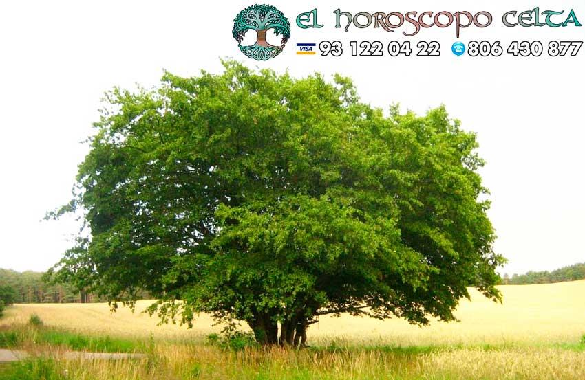 El Carpe - tu árbol celta