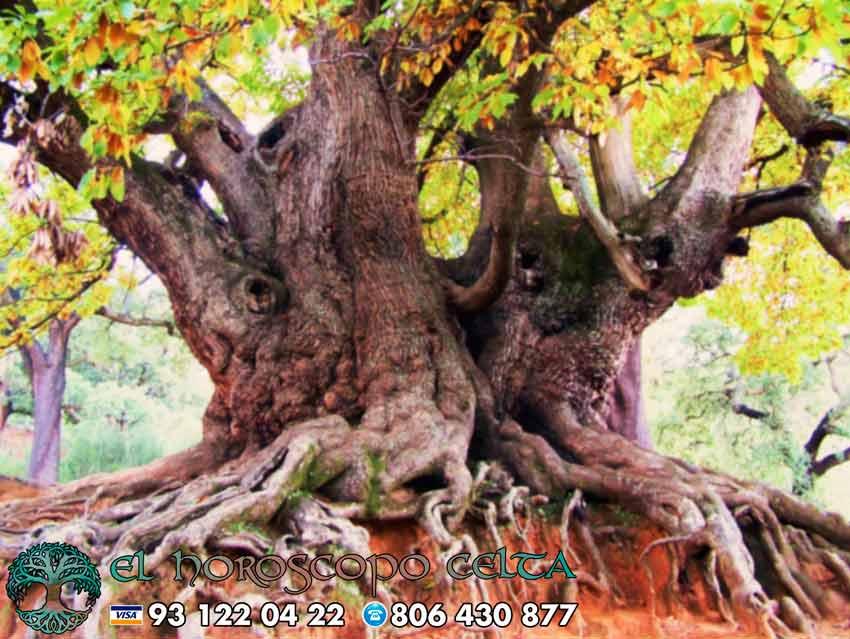 El Castaño- tu árbol celta