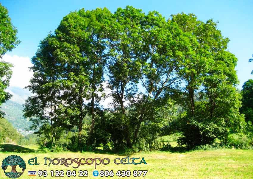 El Fresno - tu árbol celta