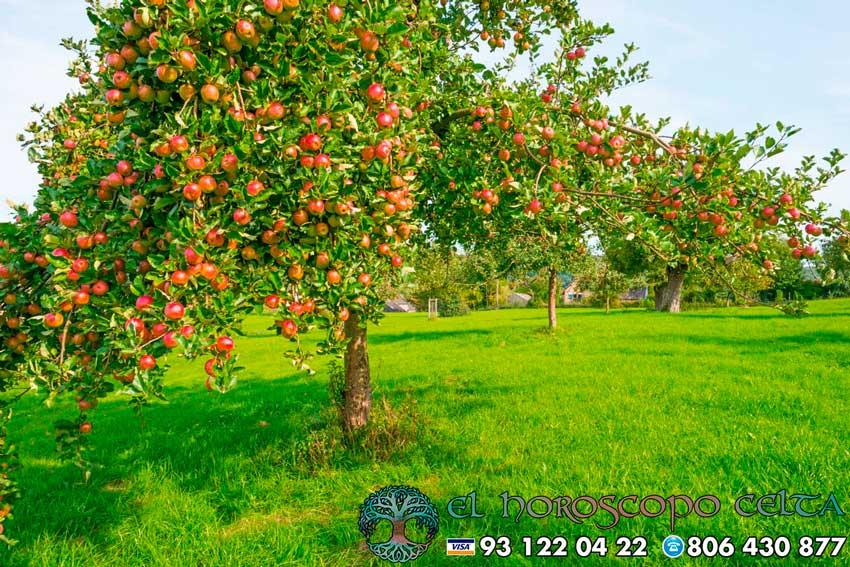 El Manzano - tu árbol celta