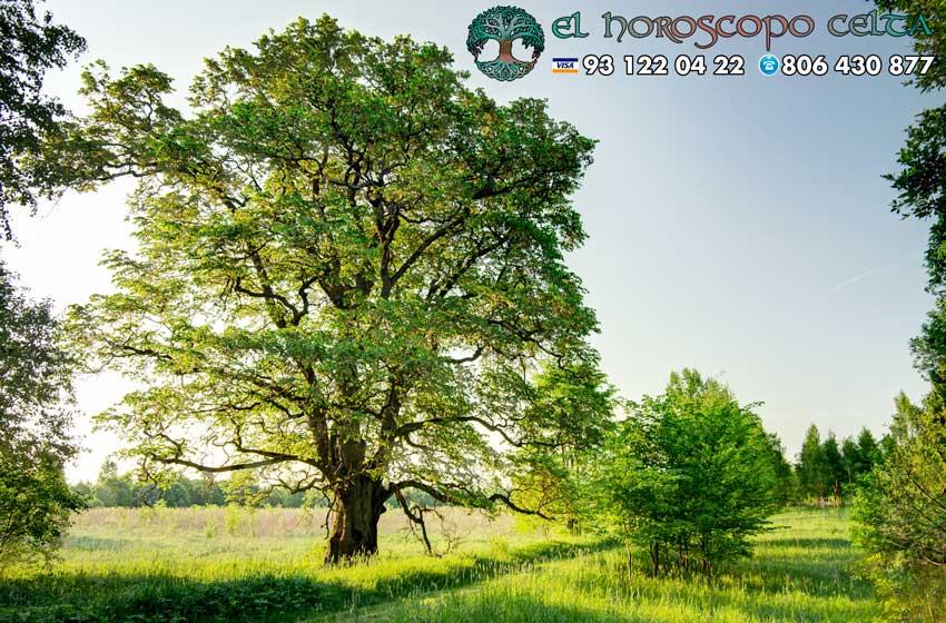 El Olmo - tu árbol celta