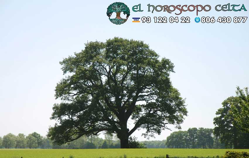 El Roble - tu árbol celta