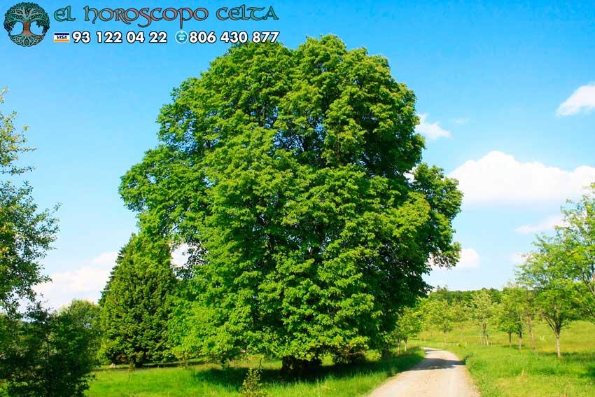 El Tilo - tu árbol celta