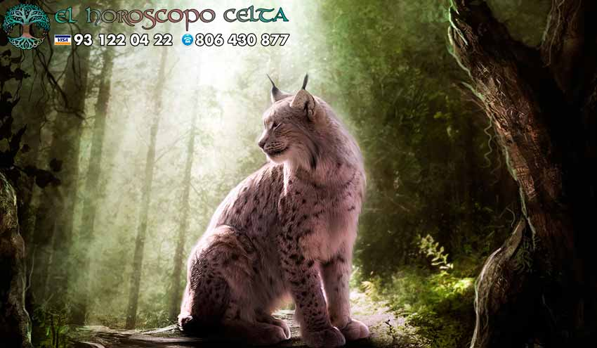 Gato - tu animal del Horoscopo Celta