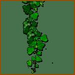 Hiedra- Árboles celtas