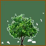 Higuera - Árboles celtas