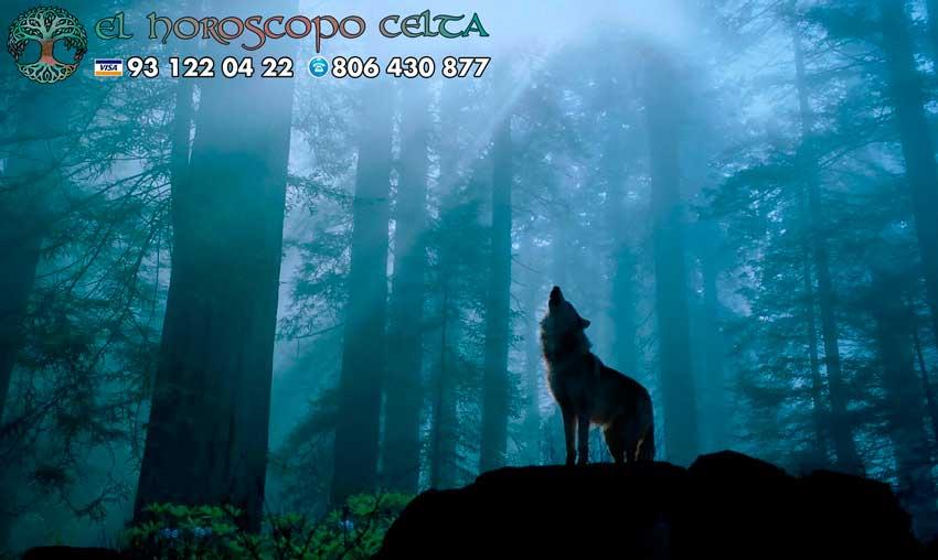 Lobo - tu animal del Horóscopo Celta