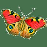 Mariposa - Animales del Horoscopo Celta 150x150
