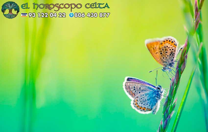 Mariposa - tu signo del Horóscopo Celta animal
