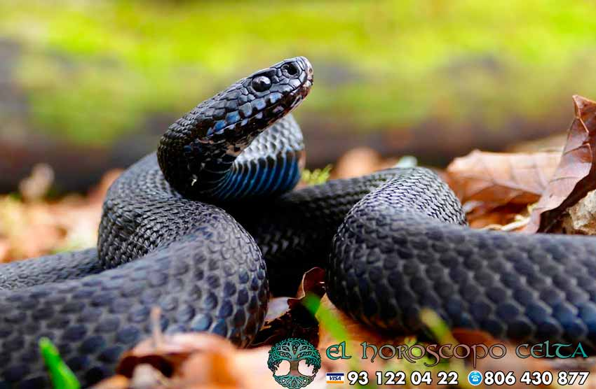 Serpiente - tu animal del Horóscopo Celta