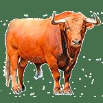Toro - Animales del Horoscopo Celta 150x150