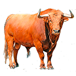 Toro - Animales del Horóscopo celta