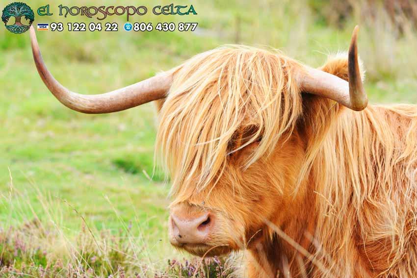 Toro - tu signo del Horóscopo Celta animal