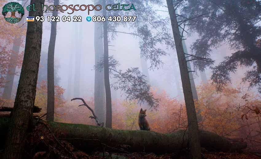 Zorro - tu animal del Horóscopo Celta