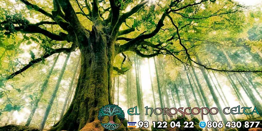 Árbol del horóscopo celta